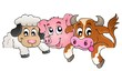 Farm animals topic image 1