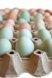Grünleger Eier