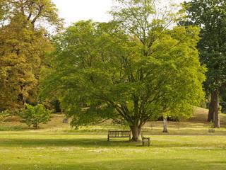 Parco a Londra