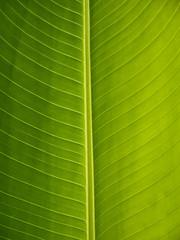 Foglia verde ravvicinata
