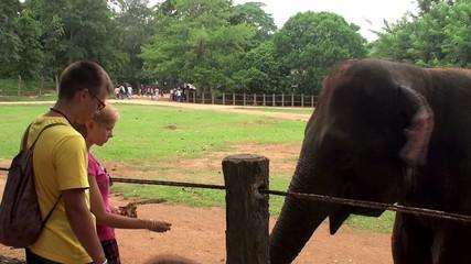 Tourists feeding the elephant by bananas