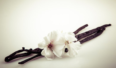 Vanilla Bean And Flower