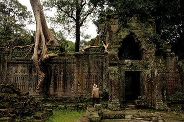 angkor - prheah khan temple, archaeologist explores the ruins