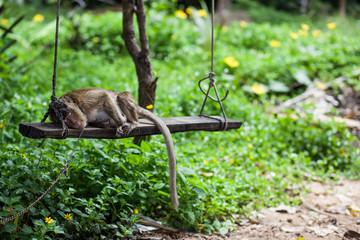 Mono durmiente