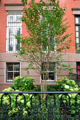 Exterior of New York City brownstone with garden