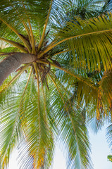 coconut tree on a beach