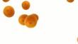 オレンジの落下