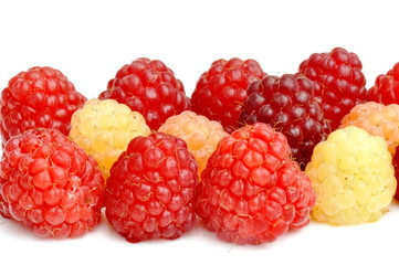 Rasberries in different colors