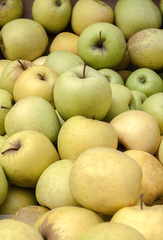 Green and yellow market apples