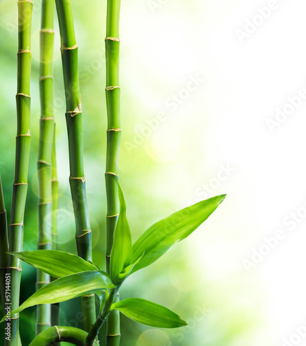 many bamboo stalks and light beam