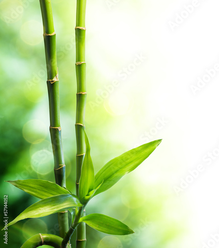 two bamboo stalks and light beam - 57144052