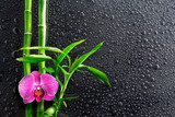 Fototapety spa background - drops, orchid and bamboo on black