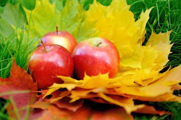 Apples on leaf