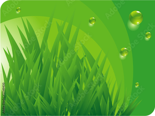 Grass and green water drops. Vector background.