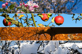Fototapety Four season. All used photos belong to me.