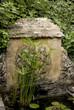 bassin, fontaine, papyrus, Jardin de Cadiot, Carlux, Dordogne