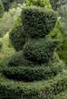 buis taillé, Jardin de Cadiot, Carlux, 24, Dordogne
