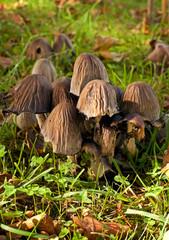 gruppo di funghi