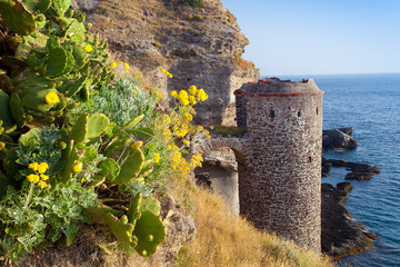 Flowers and castle on capraia island, Elba, Tuscany, Italy, Euro
