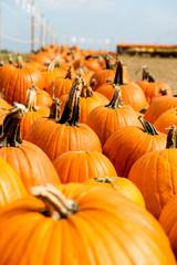 orangene riesen kürbisse auf dem markt