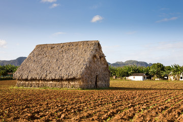Drying shed, Vinales