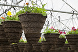 Pots of Annuals Hanging in Greenhouse