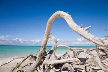 Driftwood on Cuban beach