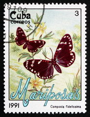 Postage stamp Cuba 1991 Faithful Beauty, Moth