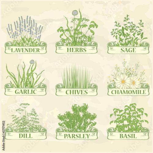 herbs,lavender, chives, garlic, dill, sage and basil, background