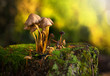 A group of mushrooms on a stub