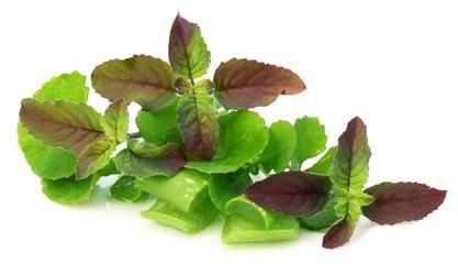 Medicinal herbs – aloe, tulsi, thankuni and kalanchoe
