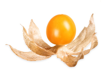 Physalis, ground cherry