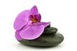 Mokry storczyk na kamieniach do spa