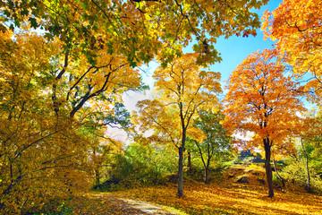 .Autumn Leaves