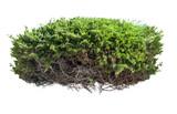Fototapety Green bush