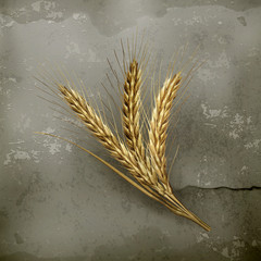 Ears of wheat, old style