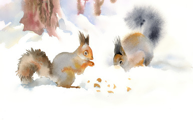 Winter squirrels eating nuts in the snow
