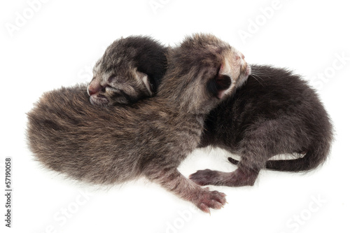 Lovely grey kittens on white background