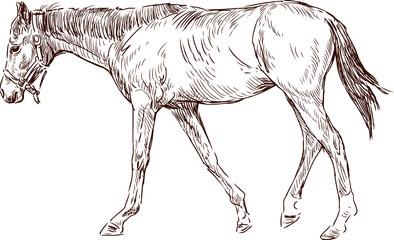 striding horse