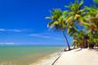 obraz - Beautiful tropical...