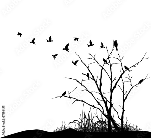 tree silhouette with birds flying - 57196457