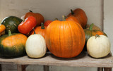 A Mixed Collection of Colourful Pumkins and Squashes.