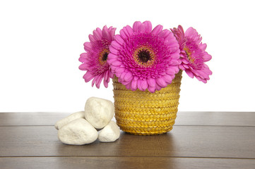 Pink Gerbera in yellow basket with white rocks