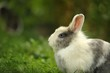 Cute Fluffy Rabbit Outdoors