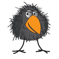 shaggy crow