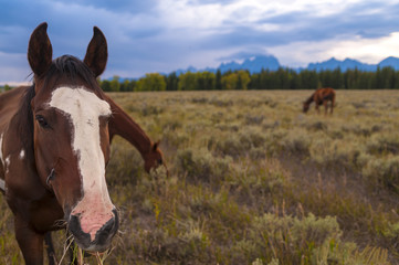Horses in Grand Tetons