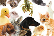 Collage of different cute animals