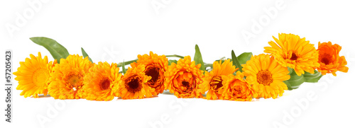 Papiers peints Marguerites Calendula flowers isolated on white