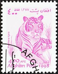 Tiger (Afghanistan 1998)