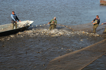 Fishermen Pull in Nets Filled With Fish
